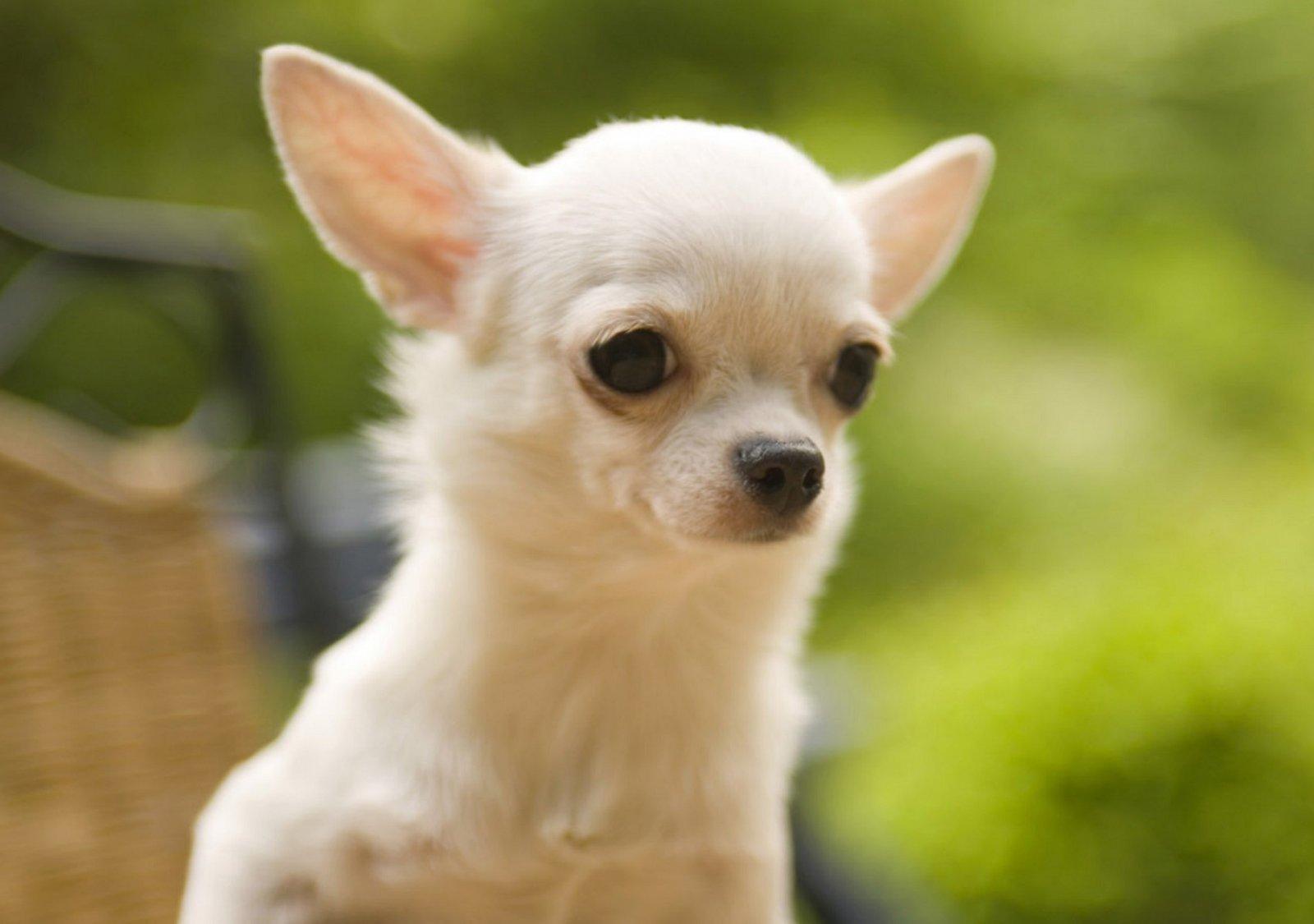 stunning perrito