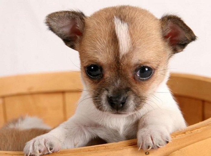 ===Hermano Perro...=== Consejos-para-tener-perro-pequeno-sano-feliz