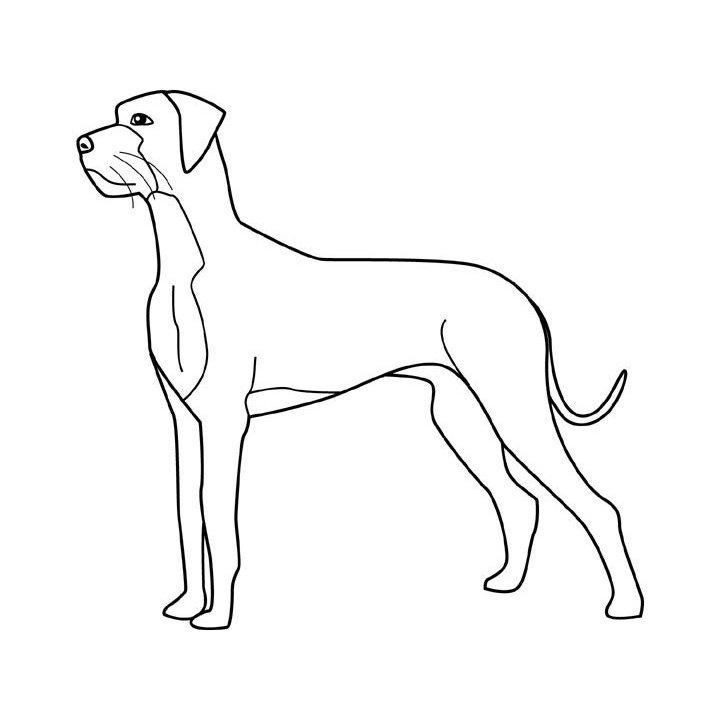 Dibujos de razas de perros para pintar. PerrosAmigos.com