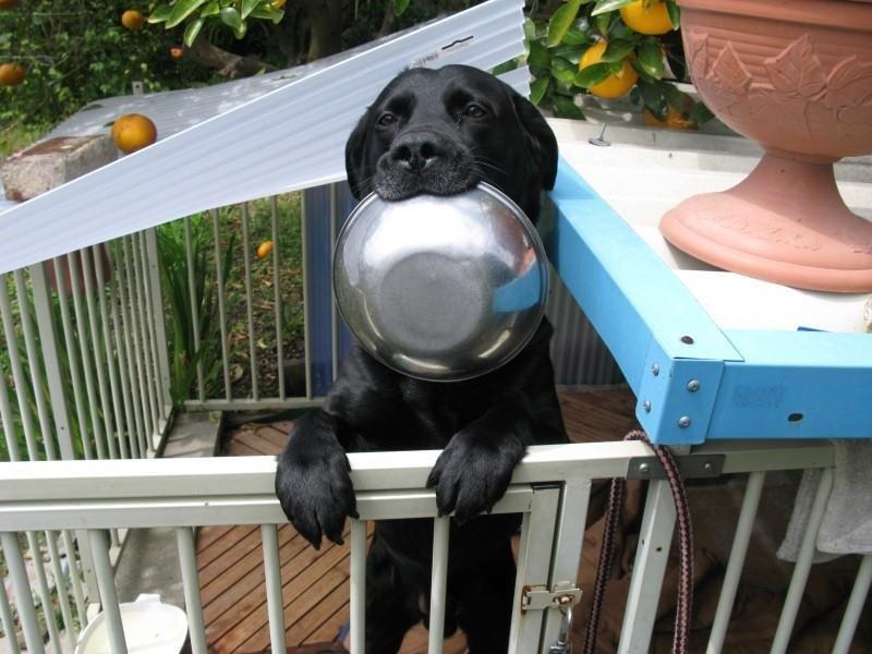 El perro dentro o fuera de casa - Perros para tener en casa ...