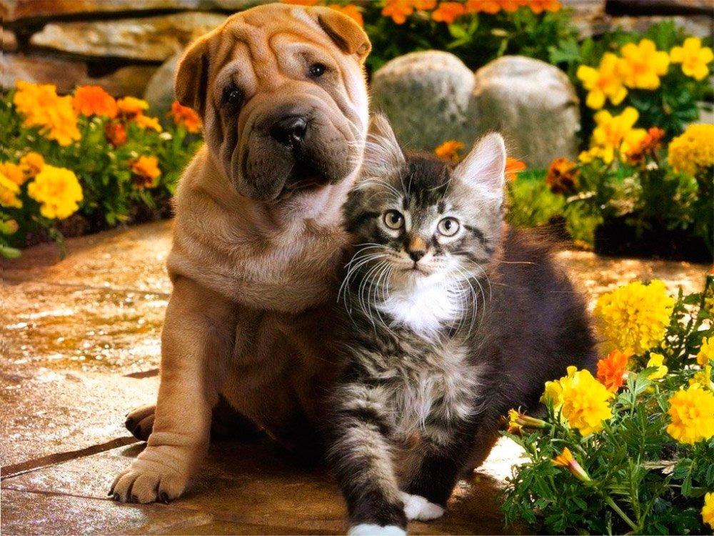 Gatos y perros, ¿...