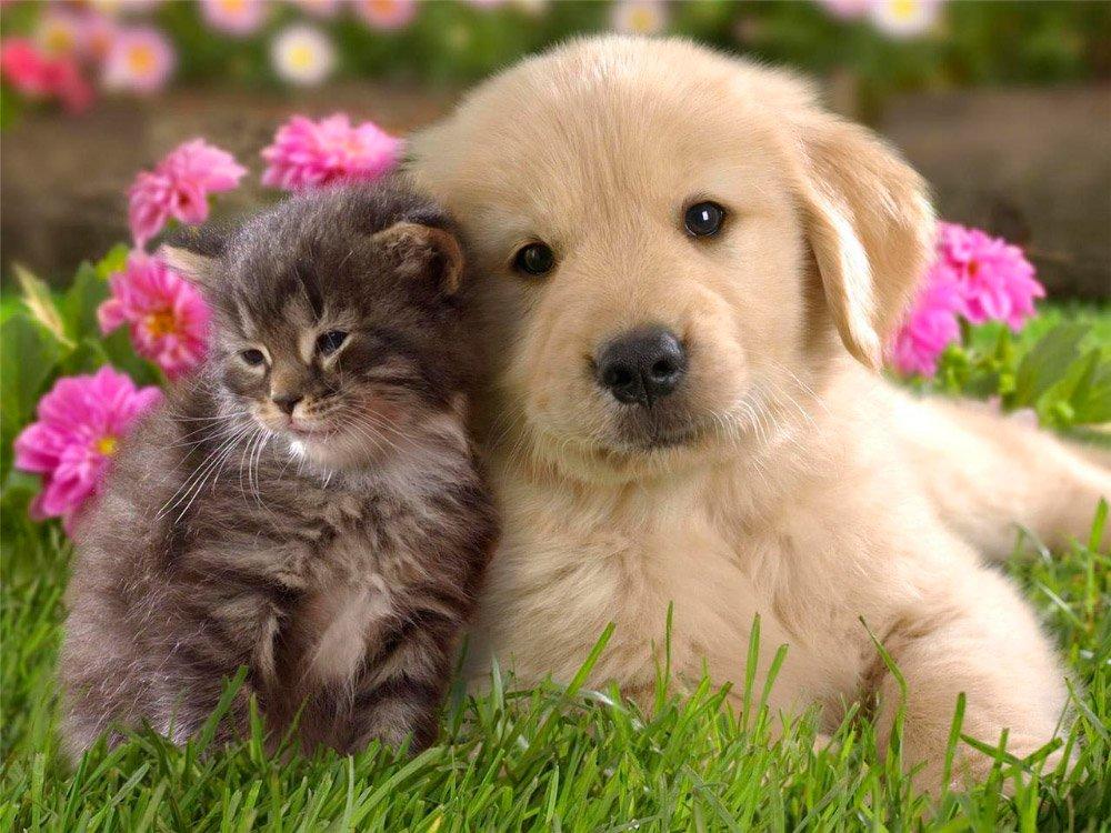 Gatos Y Perros, ¿pueden Llevarse Bien?. PerrosAmigos.com