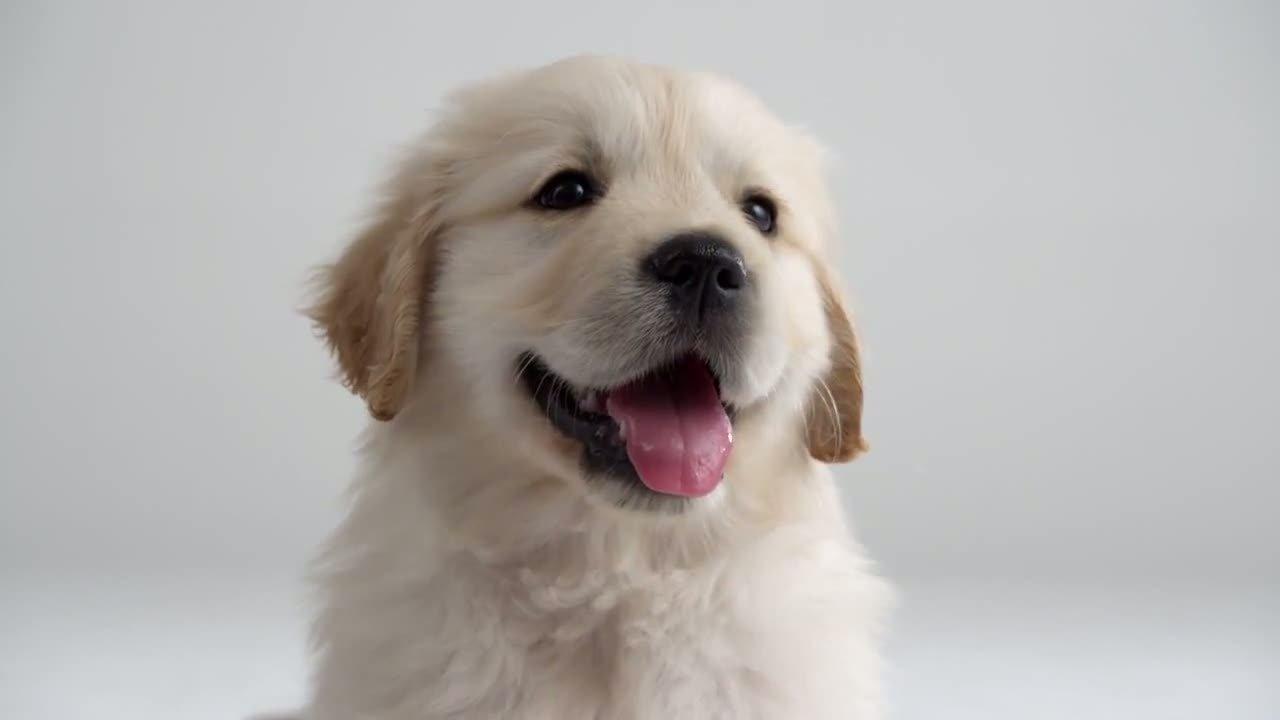 Listado de razas de perros