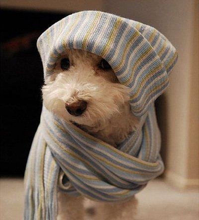 Resultado de imagen para mascotas clima frio