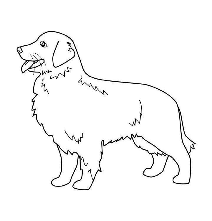 Dibujos de perros para colorear dibujos de razas de perros para pintar - Dibujos originales para pintar ...