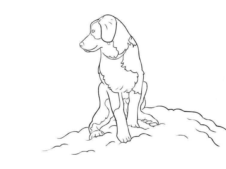Dibujos De Perros Para Colorear Dibujos De Razas De