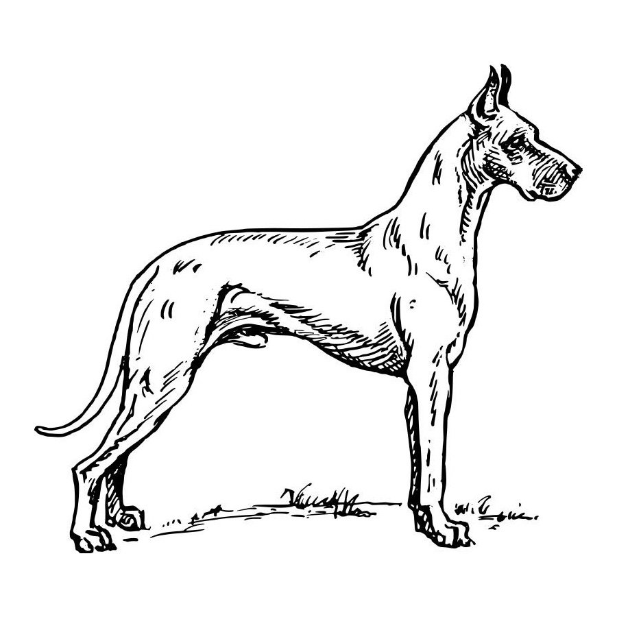 Hello Caillou Going To School Coloring Page also Quacks additionally Seal Animal Vector Silhouette besides 2010 05 01 archive further Ferris 20Wheel 20clipart 20funfair. on dog park