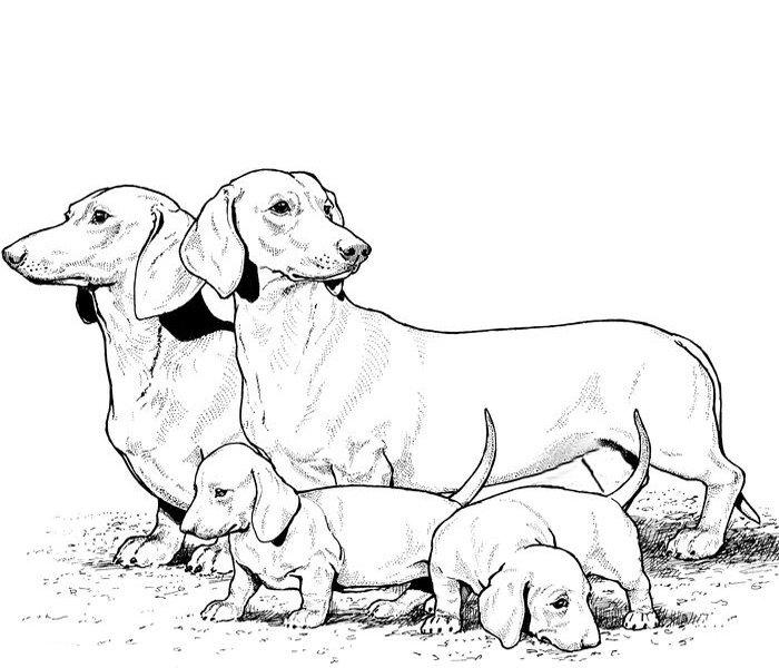Recomendaciones de alimentos para perros para un mastín