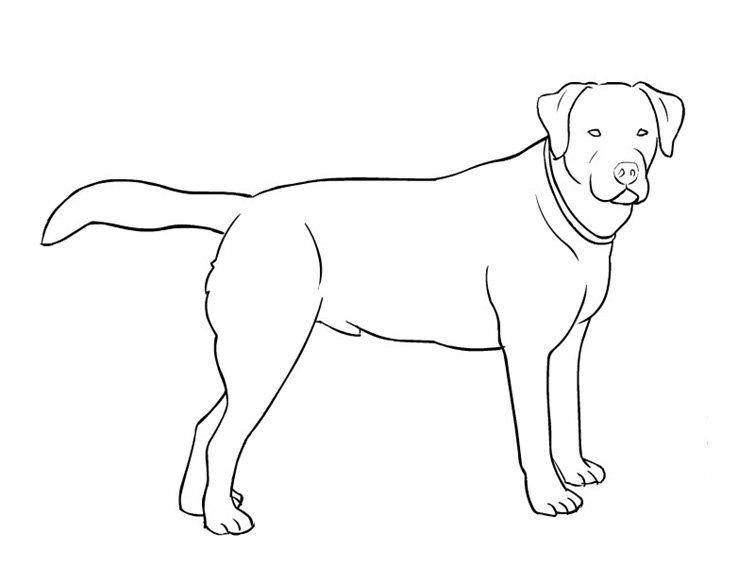 Dibujos De Perros Para Colorear Dibujos De Razas De Perros Para Pintar