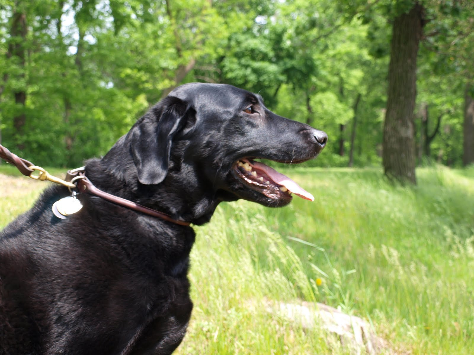 Fotos De Razas De Perros. PerrosAmigos.com