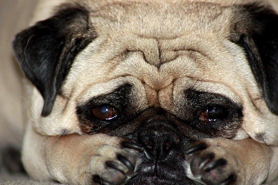 Resultado de imagen para perros tristes