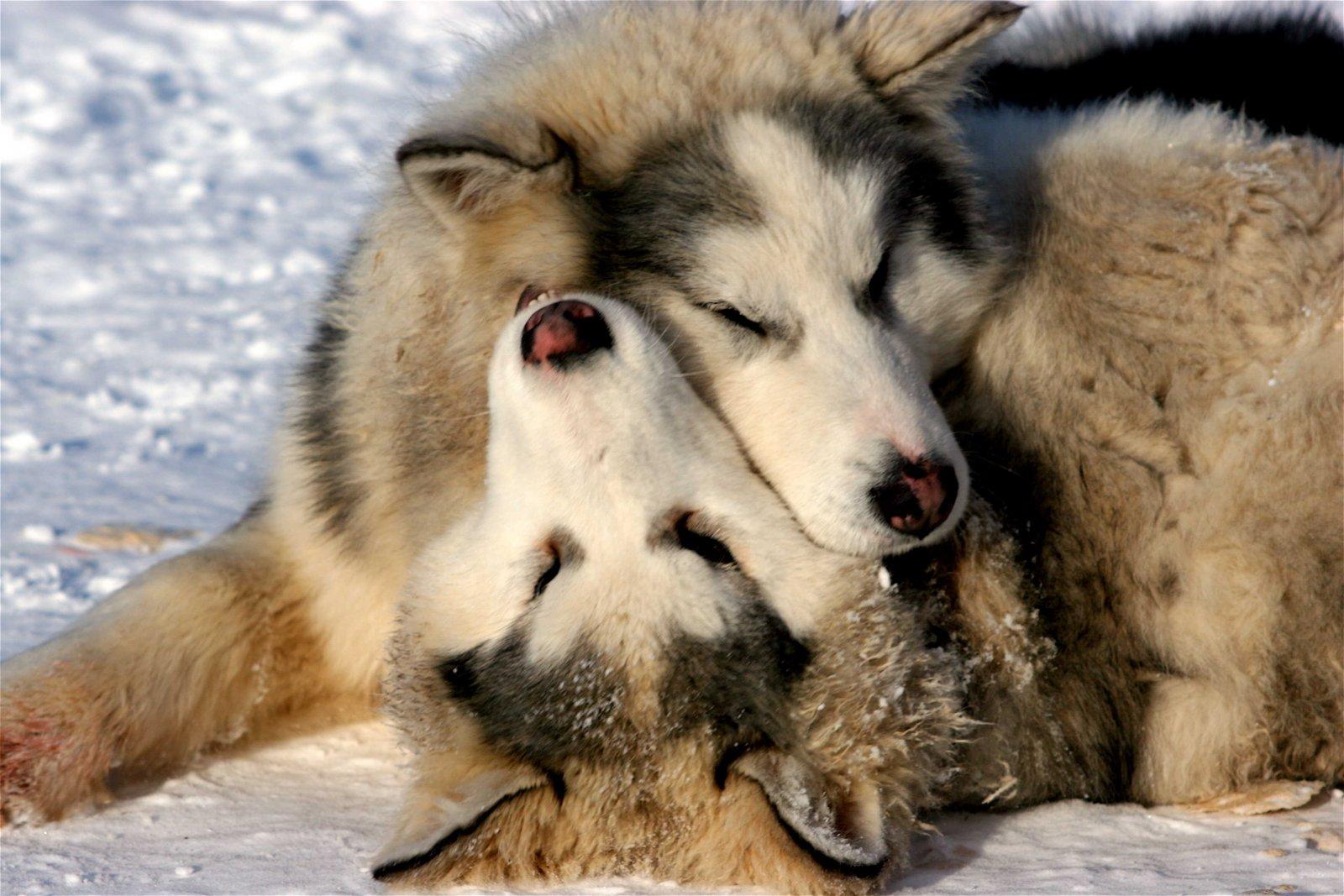Orígenes del adiestramiento canino. PerrosAmigos.com