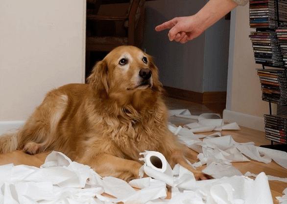 Pautas para castigar al perro. PerrosAmigos.com