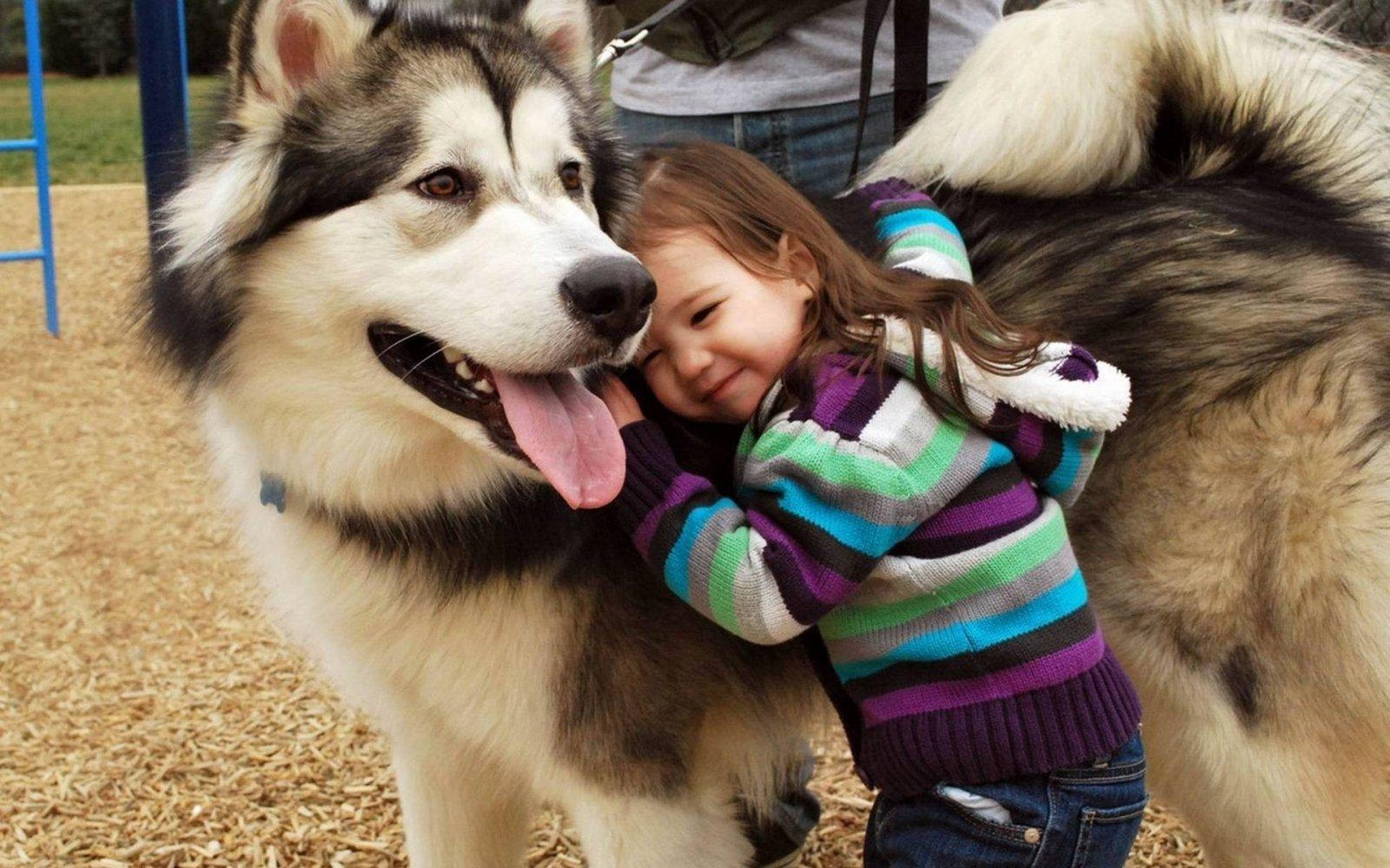 Por que deberias tener un perro
