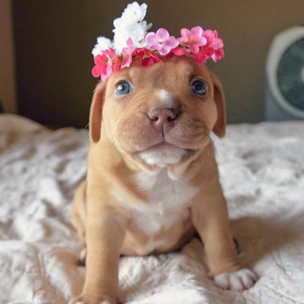 Adorables cachorros que animaran el dia (2)