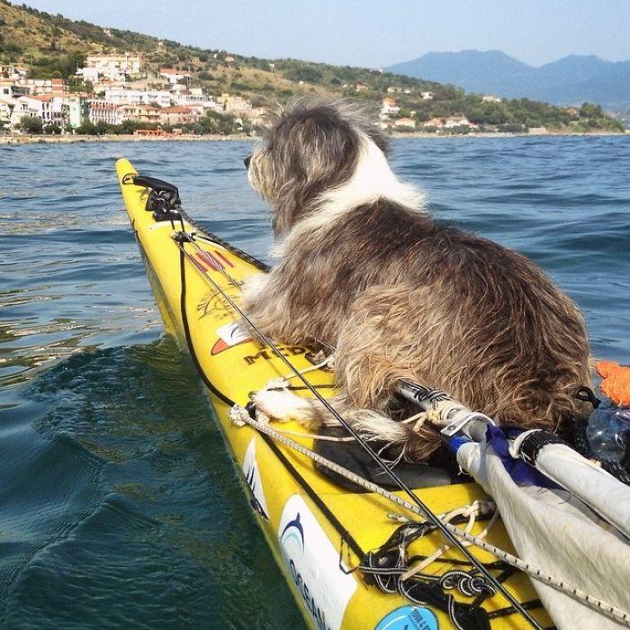 Como hacer 5.000 km de kayak con tu perro (6)