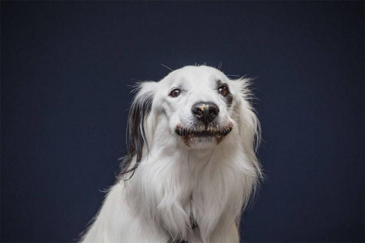 Divertidas fotos de perros comiendo manteca (4)
