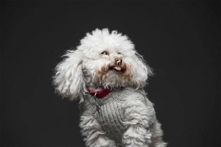Divertidas fotos de perros comiendo manteca (9)