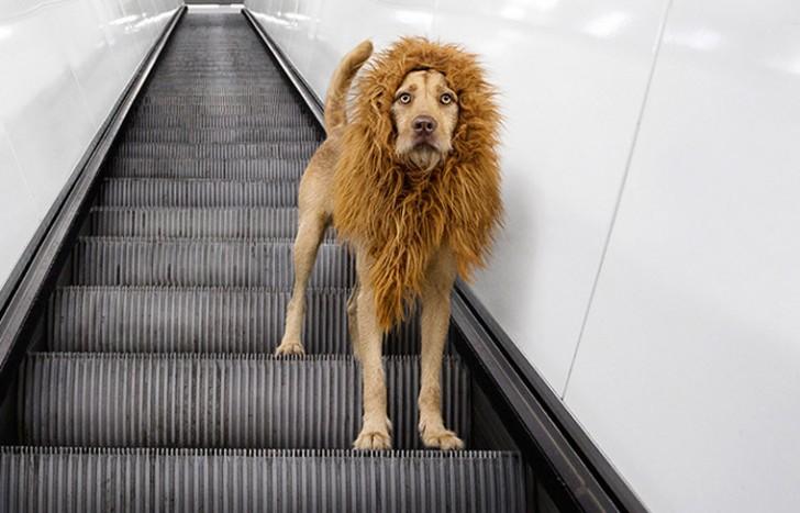 El perro-león