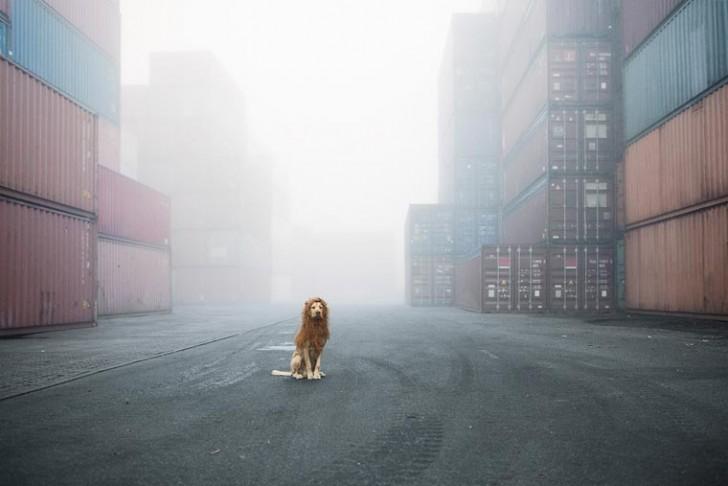 el-perro-leon-11