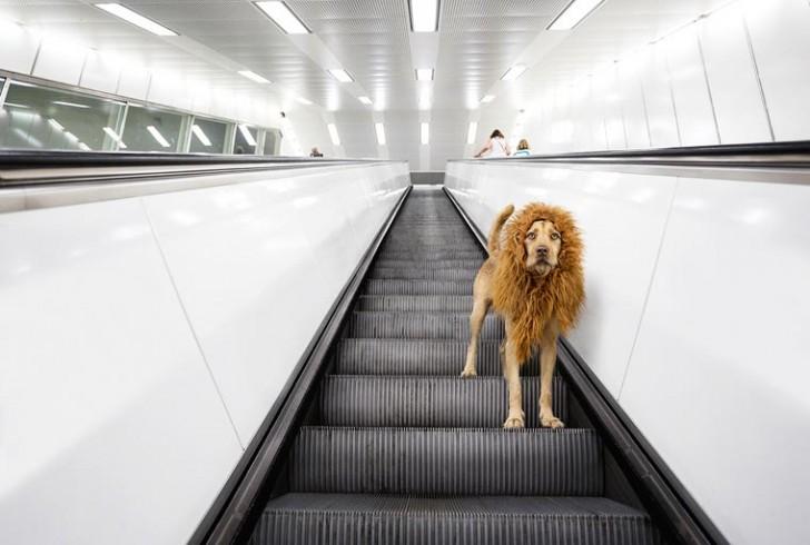 el-perro-leon-13