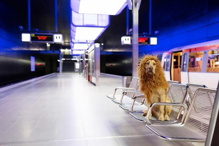 el-perro-leon-15