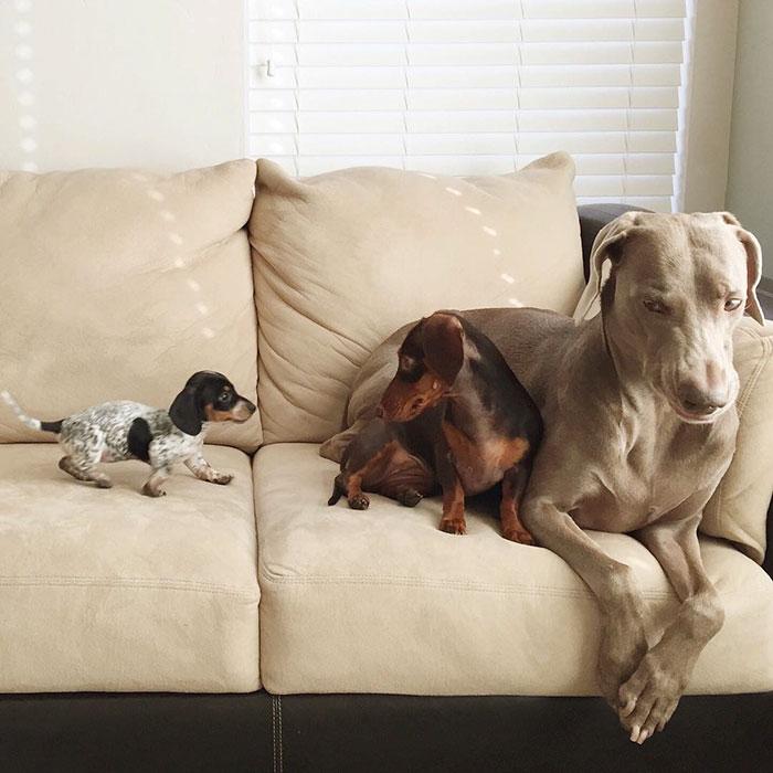 Fotos de 3 amigos inseparables (14)