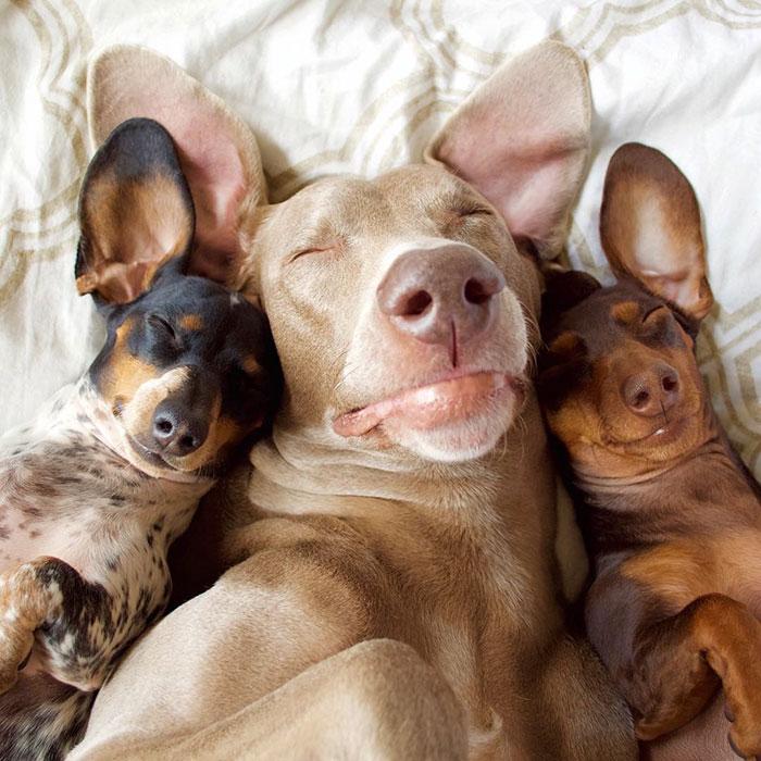Fotos de 3 amigos inseparables (2)