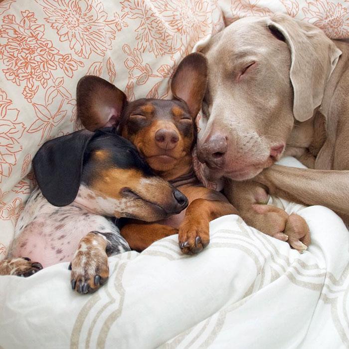 Fotos de 3 amigos inseparables (4)