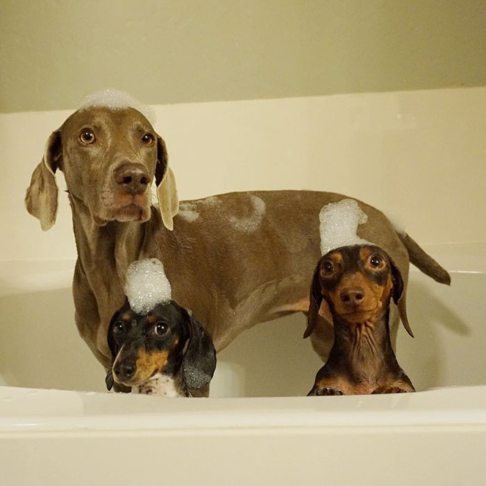 Fotos de 3 amigos inseparables (8)