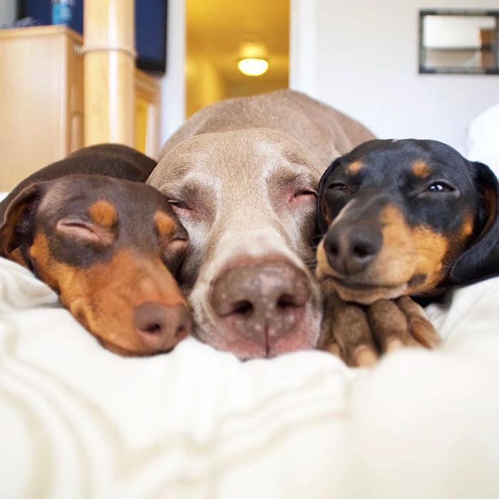 Fotos de 3 amigos inseparables (9)