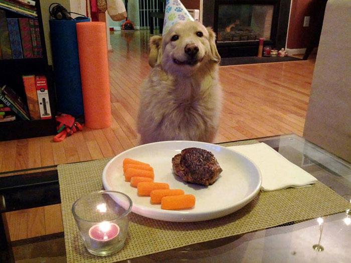 Fotos de perros felices 1