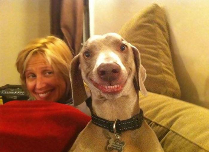 Fotos de perros felices 10