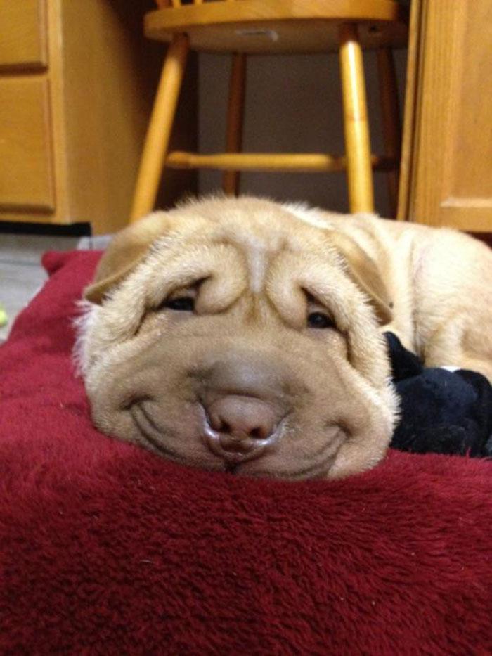 Fotos de perros felices 12