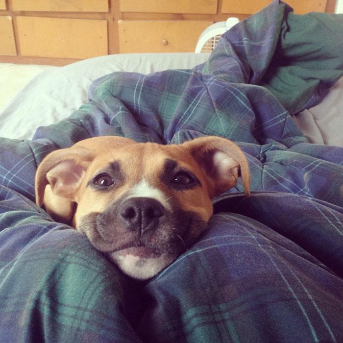 Fotos de perros felices 14