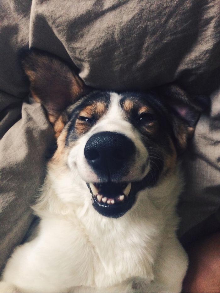 Fotos de perros felices 16