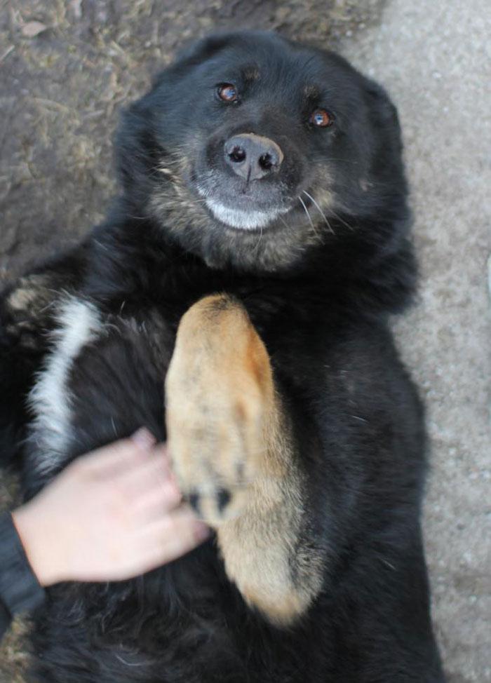 Fotos de perros felices 21