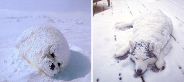 Fotos que muestran que las focas son como los perros del mar (1)