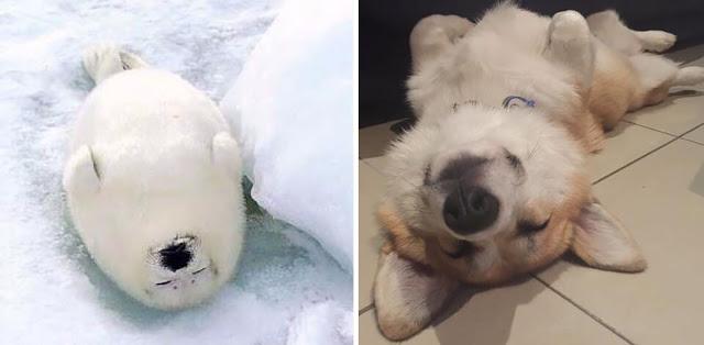 Fotos que muestran que las focas son como los perros del mar (10)