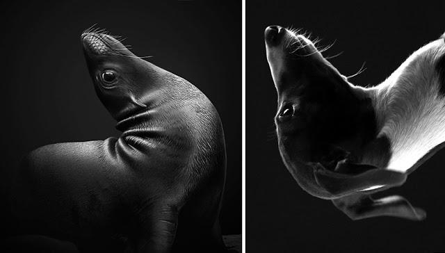 Fotos que muestran que las focas son como los perros del mar (11)