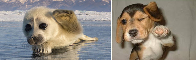 Fotos que muestran que las focas son como los perros del mar (12)