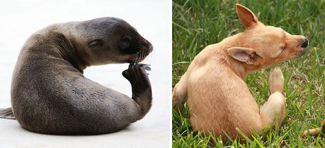 Fotos que muestran que las focas son como los perros del mar (13)