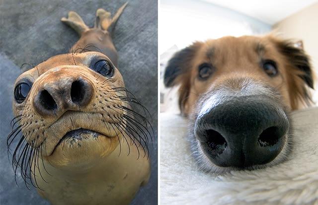 Fotos que muestran que las focas son como los perros del mar (17)