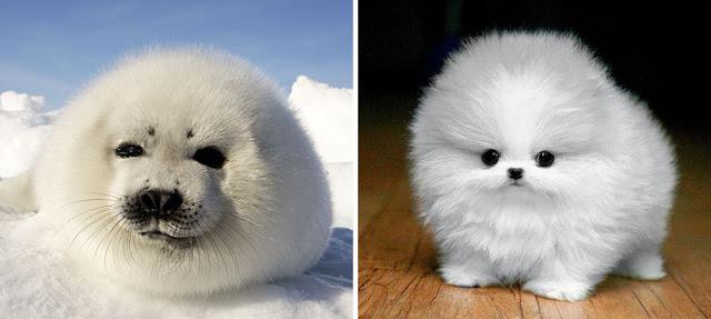 Fotos que muestran que las focas son como los perros del mar (18)