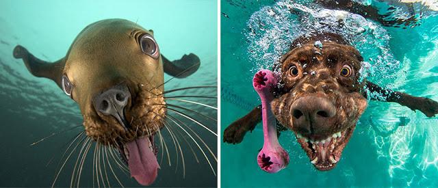 Fotos que muestran que las focas son como los perros del mar (20)