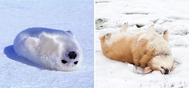 Fotos que muestran que las focas son como los perros del mar (3)
