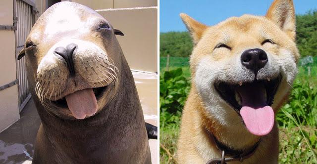 Fotos que muestran que las focas son como los perros del mar (4)