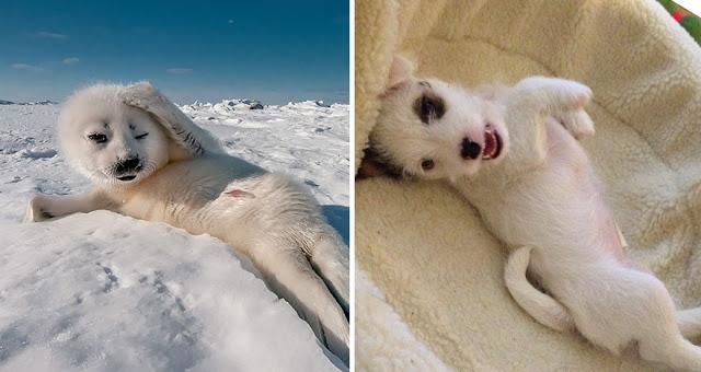 Fotos que muestran que las focas son como los perros del mar (6)