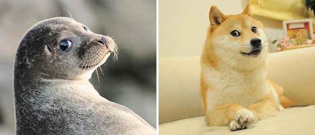 Fotos que muestran que las focas son como los perros del mar (7)