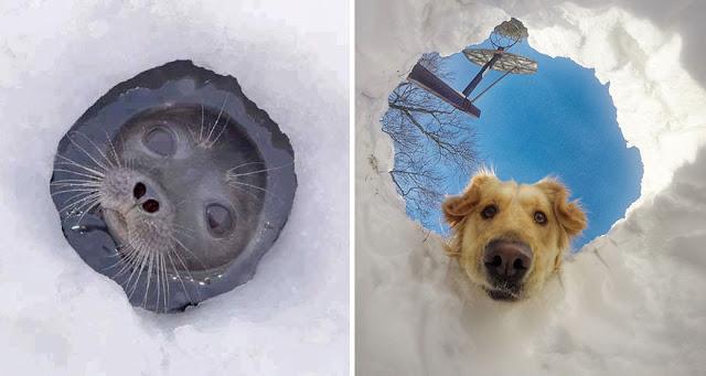 Fotos que muestran que las focas son como los perros del mar (9)